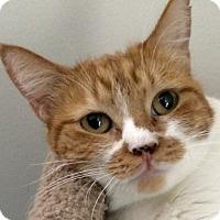 Adopt A Pet :: Harriette - Winchester, CA