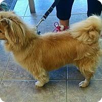Adopt A Pet :: Punkin - conroe, TX