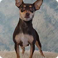 Adopt A Pet :: Kennedy - Henderson, NV