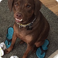 Adopt A Pet :: Jilly - San Antonio, TX