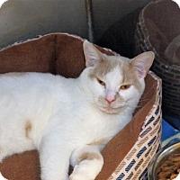 Adopt A Pet :: Harper - Monroe, LA