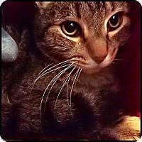 Adopt A Pet :: Joey - Colorado Springs, CO