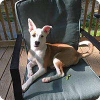 Adopt A Pet :: sassy - North Brunswick, NJ