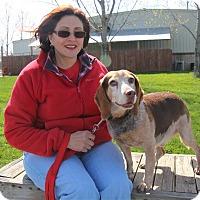 Adopt A Pet :: Rock - Elyria, OH