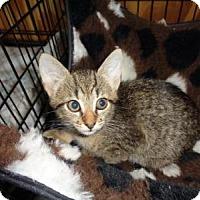 Adopt A Pet :: Savanah - Breinigsville, PA