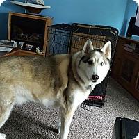 Adopt A Pet :: Shane - Belleville, MI