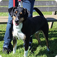 Adopt A Pet :: Nolan-Prison Graduate - Elyria, OH