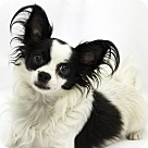 Adopt A Pet :: Riser