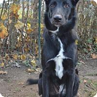 Adopt A Pet :: Arthur (now Sammy) - Danbury, CT