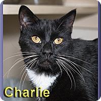 Adopt A Pet :: Charlie - Aldie, VA