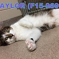 Adopt A Pet :: Taylor - Tiffin, OH