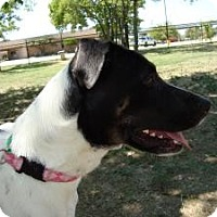 Adopt A Pet :: Nasserine - Justin, TX