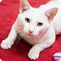 Adopt A Pet :: Hiro - Chicago, IL