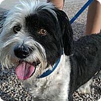 Adopt A Pet :: Kayser - Scottsdale, AZ