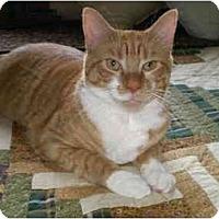 Adopt A Pet :: Wilson - Howell, NJ