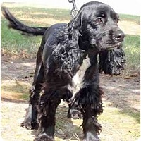 Adopt A Pet :: Kipp - Sugarland, TX