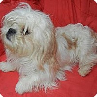 Adopt A Pet :: Monica ADOPTED!! - Antioch, IL