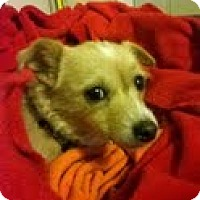 Adopt A Pet :: Buster - Shawnee Mission, KS