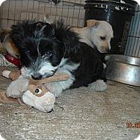 Adopt A Pet :: Mandy - San Ysidro, CA