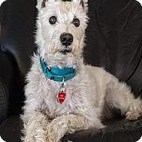 Adopt A Pet :: Lukas - Phoenix, AZ