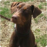 Adopt A Pet :: Killian--adopted!! - New Richmond, OH