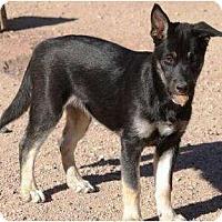 Adopt A Pet :: Theo - Gilbert, AZ