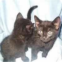 Adopt A Pet :: Baghera - Keizer, OR