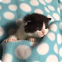 Adopt A Pet :: Cadbury - Union, KY