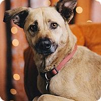 Adopt A Pet :: Yogui - Portland, OR