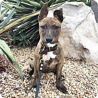 Adopt A Pet :: Kiwi - Mission Viejo, CA