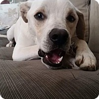 Adopt A Pet :: Rylan - nashville, TN