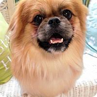 Adopt A Pet :: Frank - Fennville, MI