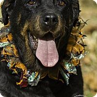 Adopt A Pet :: Annie - Frederick, PA