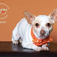 Adopt A Pet :: Guero - Houston, TX