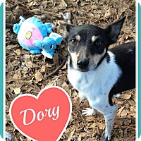 Adopt A Pet :: Dory - Raleigh, NC