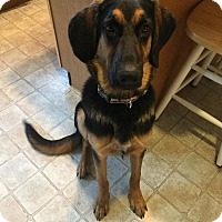 Adopt A Pet :: Cody - Brogue, PA