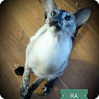 Adopt A Pet :: Ra - Fairborn, OH