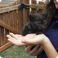 Adopt A Pet :: Panther - McDonough, GA