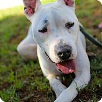 Adopt A Pet :: Sashimi - San Diego, CA