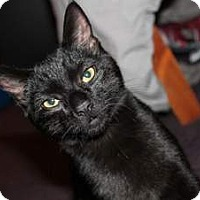 Adopt A Pet :: MISTER - Houston, TX