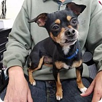 Adopt A Pet :: Mojo - Plainfield, IL
