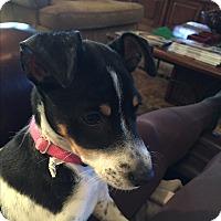 Adopt A Pet :: A - LILLY - Seattle, WA