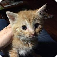Adopt A Pet :: Katie - Wilmore, KY