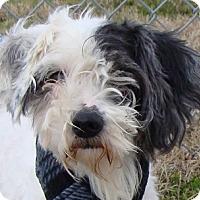 Adopt A Pet :: I'M ADOPTED Oscar Painter - Oswego, IL