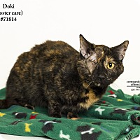 Adopt A Pet :: Doki (Foster Care) - Baton Rouge, LA
