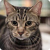 Adopt A Pet :: Clyde - Sacramento, CA