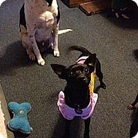 Adopt A Pet :: Missy - Hancock, MI