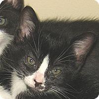 Adopt A Pet :: CHARLIE - 2012 - Hamilton, NJ