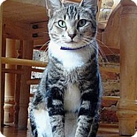 Adopt A Pet :: Alma - Chicago, IL
