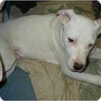Adopt A Pet :: Ricky - Lodi, CA